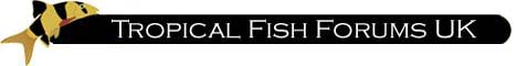 Tropical Fish Forums UK