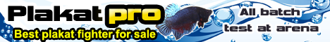 Top Betta Fighter for sale shipping worldwide.